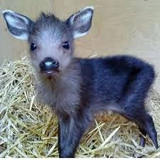Image result for baby moose