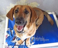A4789169 I am an super-friendly 1 yr old female tan/black Basset Hound mix. I came to the shelter as a stray on Jan 5. available 1/9/15 Baldwin Park shelter https://www.facebook.com/photo.php?fbid=906414336037071&set=a.705235432821630&type=3&theater