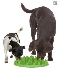 Dog Pet Puppy Interactive Slow Feeder Healthy Feeding Food Bowl Dish Green S in Pet Supplies, Dog Supplies, Dishes & Feeders Slow Feeder, Pet Feeder, Dog Food Bowls, Pet Bowls, Pet Puppy, Dog Cat, Interactive Dog Toys, Dog Shop, Dog Design