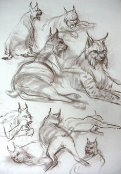 lynx's are supposed to symbolize secrets, guardian, guide - and a cat's intelligence. thinking on my sternum! Animal Sketches, Animal Drawings, Art Sketches, Gesture Drawing, Life Drawing, Drawing Reference Poses, Art Reference, Nature Sketch, Animal Magic
