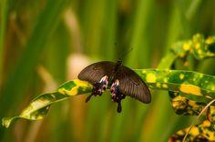 Luang Prabang butterfly park