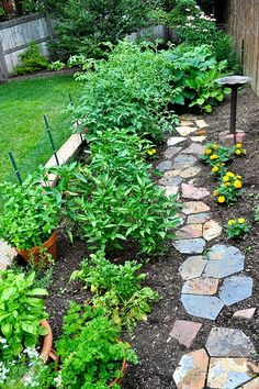 Vegetable Garden~~ looks like a flower bed my-wishes-for-my-garden-one-day