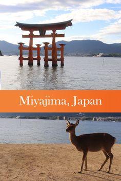 Miyajima (Itsukushima), Japan Places Around The World, Travel Around The World, Around The Worlds, Beautiful Places In Japan, Amazing Places, Miyajima, Dangerous Animals, Once In A Lifetime, Amazing Adventures