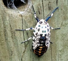 Bug Weird Strange Insects | Strange But Pretty Looking Bug