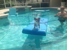 This is Charley, one of our client's dogs enjoying his vacation at his owner's parent's house in Florida. I will provide your pets with love and care and attention, but I can not do this for them! Some Pictures, Your Pet, Florida, Vacation, Dog, Pets, House, Animals, Diy Dog