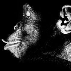 Walter Schels ist ein deutscher Fotograf. Im Jahr 1966 ging er nach New York um Fotograf zu werden. Walter Schels Portraits zeigen oftmals Menschen und Tiere. Auch Extremsituationen werden von ihm fotografisch festgehalten. Jetzt lebt und arbeitet Schels in Hamburg.
