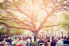Houston Wedding Venue: A majestic oak tree with storybook branches #gardenweddingvenues #perfectweddingvenue