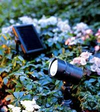 Solar Landscape Lights make your garden attractive in the evening and can provide safe footing in the dark.