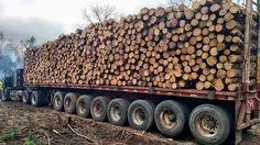 10 Fast Dangerous Idiots Biggest Logging Wood Truck Operator Driving Off Road Working Train Truck, Road Train, Logging Equipment, Heavy Equipment, Cool Trucks, Big Trucks, Wood Lumber, Lumber Mill, Timber Logs