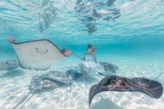 Ocean Life - Elena Kalis