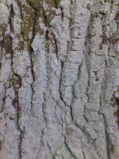 bark; hett woods