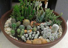 Succulent Arrangements, Cacti And Succulents, Planting Succulents, Cactus Plants, Planting Flowers, Succulent Outdoor, Succulent Gardening, Mini Cactus Garden, Cactus Terrarium