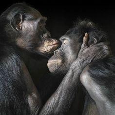''More than human'' by Tim Flach.