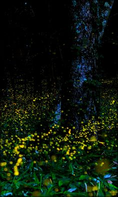 Fireflies Live Wallpaper Free - Android Apps on Google Play