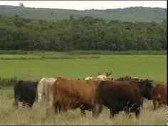 Integração Lavoura Pecuária e Floresta