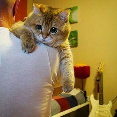 """"""" Hugs Dad """" Tag a friend! by @hosico_cat"""
