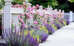 vườn hoa the eden rose