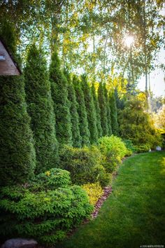Tree Border:  Trees and bushes provide privacy along the border of the property. #LandscapeBorders
