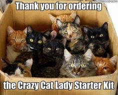 Funny pictures about Crazy Cat Lady Starter Kit. Oh, and cool pics about Crazy Cat Lady Starter Kit. Also, Crazy Cat Lady Starter Kit photos. Crazy Cat Lady Meme, Crazy Cats, Crazy Dog, Crazy Bird, Funny Animal Pictures, Funny Animals, Cute Animals, Funniest Animals, Anime Animals