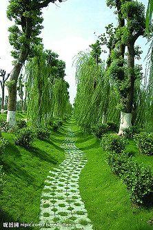 Beautiful pathway and lush scenic view