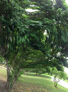 Tree in a whirl!