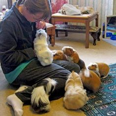 Once upon a time, we had 13 of them.   The Guinea Pig Whisperer!