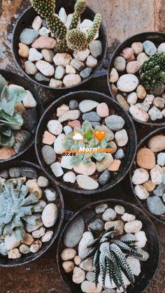 Kaktus sekulen🧡 Beans, Vegetables, Food, Cactus, Essen, Vegetable Recipes, Meals, Yemek, Beans Recipes