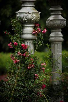 Bellafaye Garden : Photo