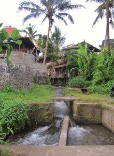 Local landscape at Ubud Bali