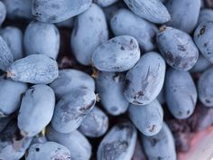Haskap berries might be the next new superfood — but most people haven't heard of them
