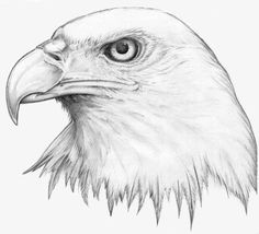 Eagle drawings eagle drawing the best tattooed images eagle tattoo designs for neck . Bird Drawings, Pencil Art Drawings, Art Drawings Sketches, Animal Drawings, Cool Drawings, Drawings Of Eagles, Simple Drawings, Realistic Drawings, Eagle Head Tattoo