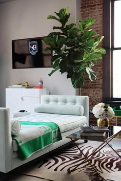 A robust fiddle leaf fig tree is a lively addition to this urban living space. The organic shape of the potted houseplant contrasts sharply with the refined silhouette of the transitional chaise lounge. Sophisticated accents complete the eclectic look: an Hermes throw, zebra print rug and x-base coffee table.