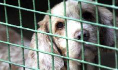 Animaux - Signez la pétition : Sauvons la SPA de la Creuse