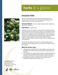 European Elder. Full document available at http://nccam.nih.gov/health/herbsataglance.htm