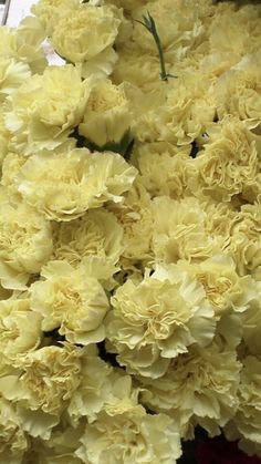 Peach Flowers, Cream Flowers, Blooming Flowers, Colorful Flowers, White Flowers, Yellow Carnations, Mini Carnations, White Carnation, 100 Day Celebration