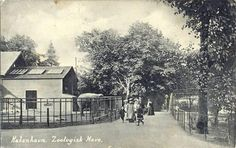 ZOOLOGISK HAVE 1918