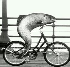 Breaking on Fox News: proof that fish do need bicycles.