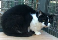 Black and white feral cat  It would be lovely to find a farm / barn home, and can be with other cats.  We can help with advice on how to settle feral cats.  Please contact Jean on 01631 566406 (after 8pm) if you feel that you can give one of our cats a forever home. Email rehoming@argyllanimalaid.org.uk