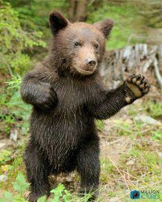 Got Cubbie? Cool!  High Five Me!