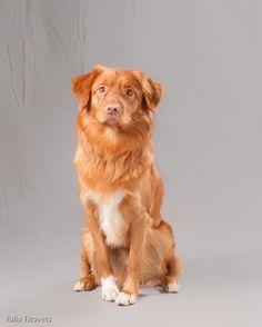 Very cute attentive pup!