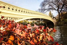 Central Park Bow Bridge with Autumn Foliage. Shot on October 31, 2015