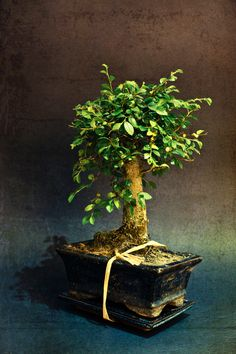 """Bonsai Zelkova"" by Jose Vazquez, via 500px."