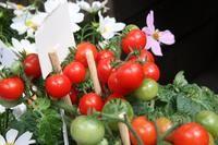 Insecticidas naturales para plantas de tomate