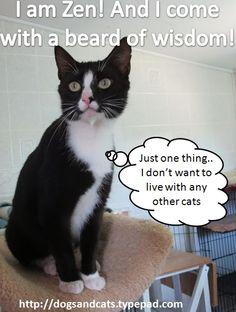 Celestial Kitties: Opt to Adopt Zen