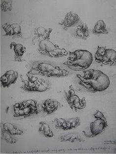 Sketches of cats by Leonardo da Vinci