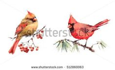 Dropbox - stock-photo-male-and-female-cardinals-sitting-on-the-branch-two-birds-watercolor-hand-painted-greeting-card-512860063.jpg