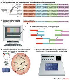 Resurrecting ancient genes: experimental analysis of extinct molecules
