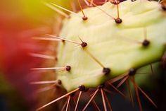 Cacto, Esporão, Natureza, Planta