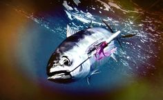 Underwater Tuna! #reelh2o #reelmello