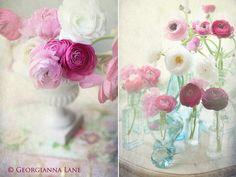 Cheerful Colors by Georgianna Lane